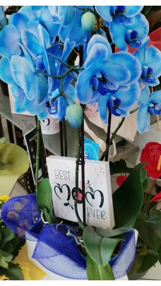 """Blue Orchid """"Best Mom"""" (F0052)"""